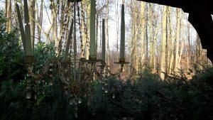 Der Herbstwald im schönsten Licht