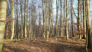 Der Herbstwald lädt zum Wandern ein